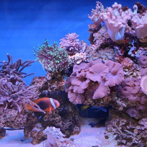 Заказать торговый аквариум для устриц и лобстеров от компании Ret